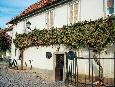 Maribor's over 400 yers old grapevine